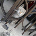 久しぶりに、地域猫を預かっているお宅に行きました。