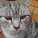 猫ちゃんのたまり場のセブンイレブン