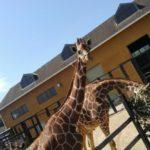 動物園にも連れて行ってもらいました。